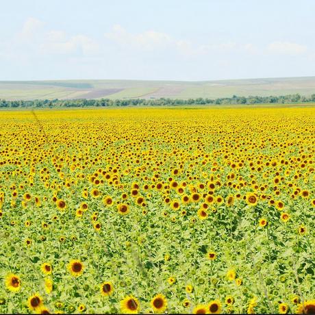 Moldova_003