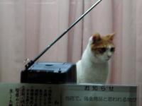 tv_cat_2